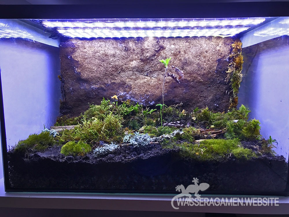 ewiges terrarium