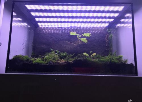 LED Strip