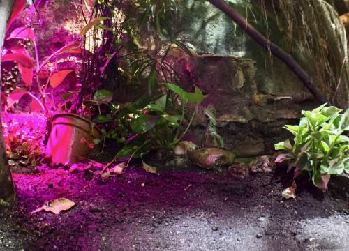 LED- Pflanzenlicht