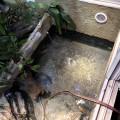 Wasserbecken Wasseragamen- Terrarium