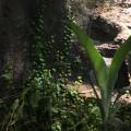 Rankende Kletterpflanze