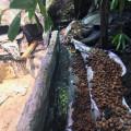 Wasserarmen Terrarium