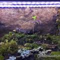 kleiner baum ewiges terrarium