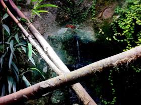 Äste und Wasserfall im Wasseragamen Terrarium