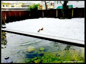 Koi Teich im Winter