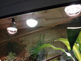 Wasseragamen terrarium beleuchtung