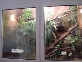 Wasseragamen Terrarium Scheiben