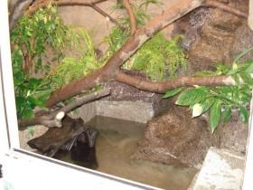 Wasserbecken Wasseragamen Terrarium